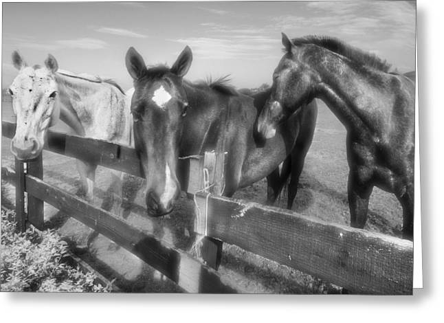 White Horses Photographs Posters Greeting Cards - Three Musketeers Greeting Card by Debra and Dave Vanderlaan