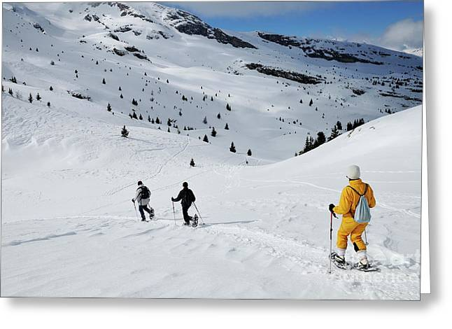 45-49 Years Greeting Cards - Three people snowshoeing Greeting Card by Sami Sarkis