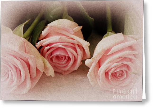 Lainie Wrightson Greeting Cards - Three Pink Roses Greeting Card by Lainie Wrightson