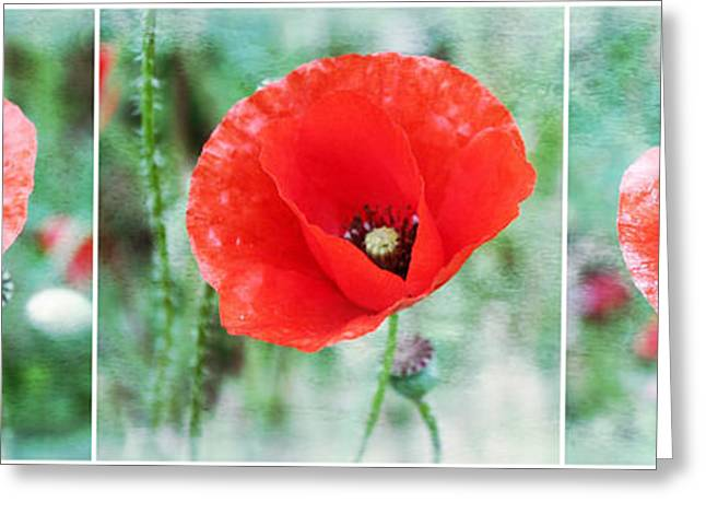Floral Digital Art Greeting Cards - Three Poppies Greeting Card by Cathie Tyler
