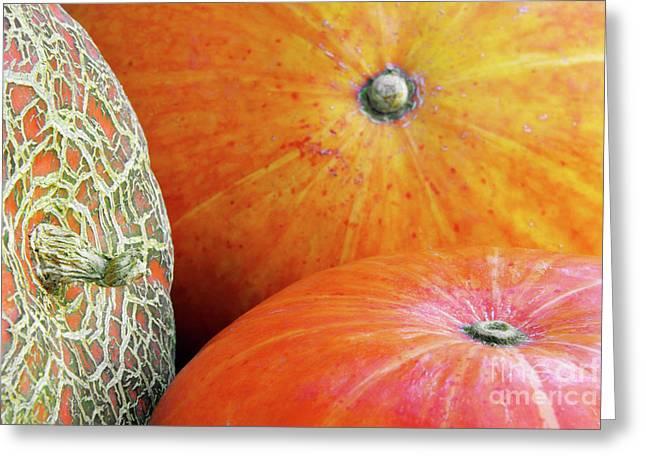Biologic Greeting Cards - Three Pumpkins Greeting Card by Carlos Caetano