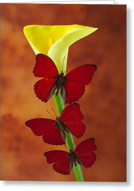 Close Up Glass Art Greeting Cards - Three red butterflies on calla lily Greeting Card by Garry Gay