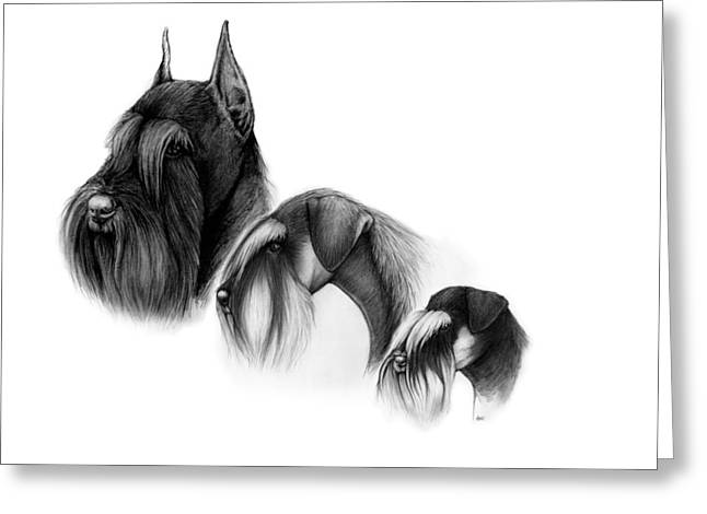 Giant Schnauzer Greeting Cards - Three sizes of schnauzers Greeting Card by Katerina A Cechova