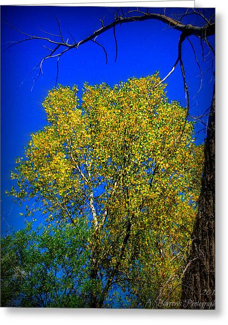 Prescott Greeting Cards - Three Stages of Autumn Greeting Card by Aaron Burrows