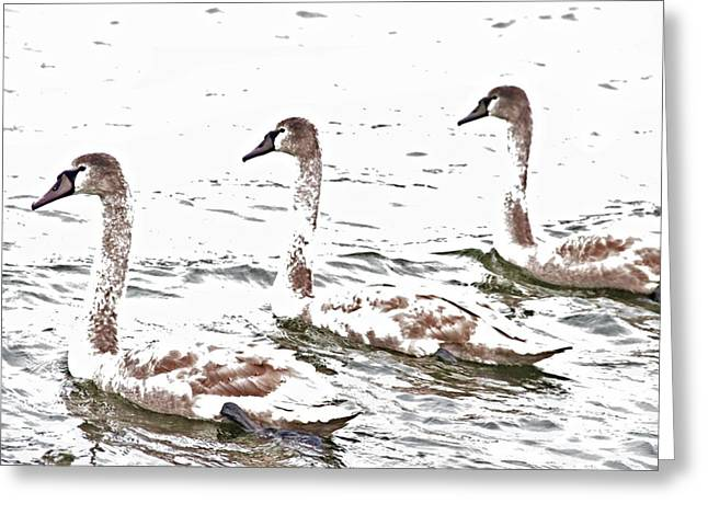 Trio Greeting Cards - Three Swans Greeting Card by Odd Jeppesen