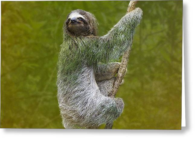 Sloth Greeting Cards - Three-Toed Sloth climbing Greeting Card by Heiko Koehrer-Wagner