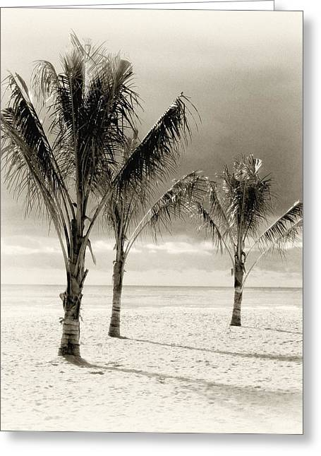 Point Pleasant Greeting Cards - Three Trees - Jersey Shore Greeting Card by Angie Tirado