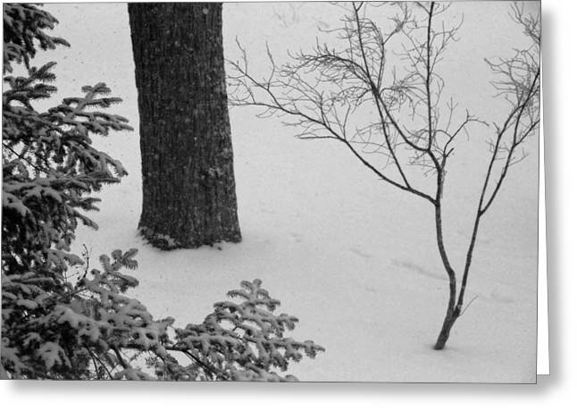 Three Trees In Snow Greeting Card by Simone Hester