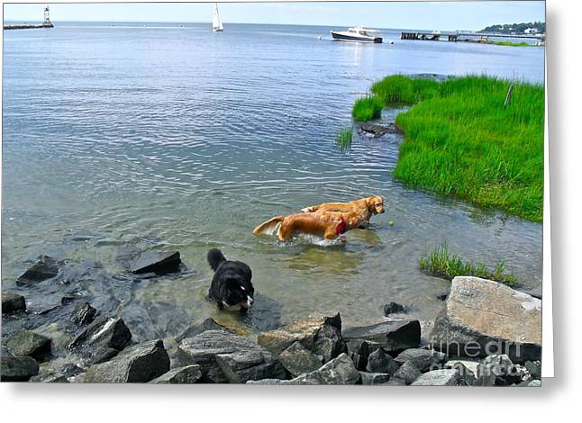 Dog Play Sea Greeting Cards - Threes a Crowd Greeting Card by Beth Saffer