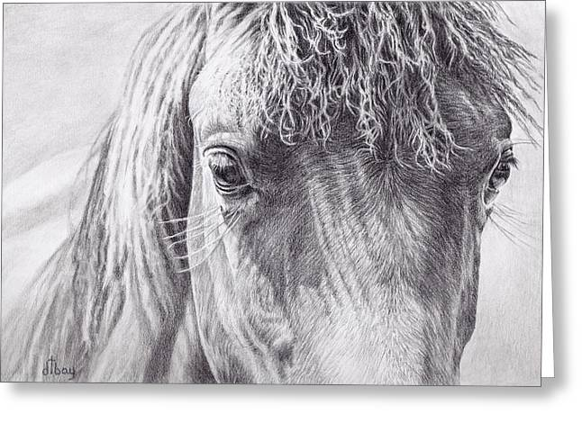 Broncos Drawings Greeting Cards - Through a Horses Eyes Greeting Card by Diane Bay