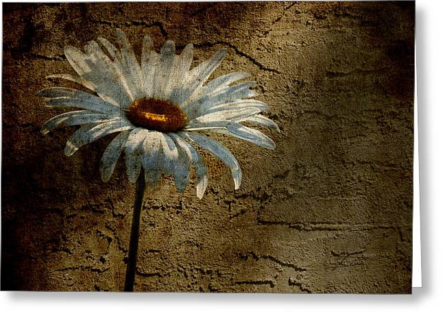 Texture Floral Greeting Cards - Through The Cracks Greeting Card by Barbara  White
