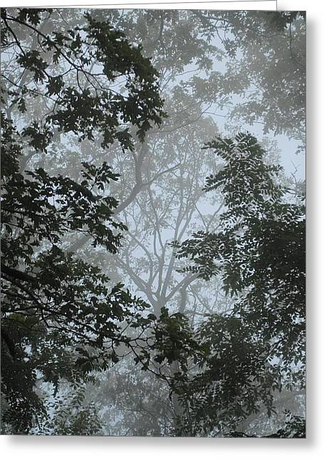 Through The Trees Greeting Card by