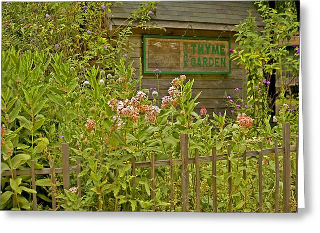 Floral Photos Greeting Cards - Thyme Garden Greeting Card by Bonnie Bruno