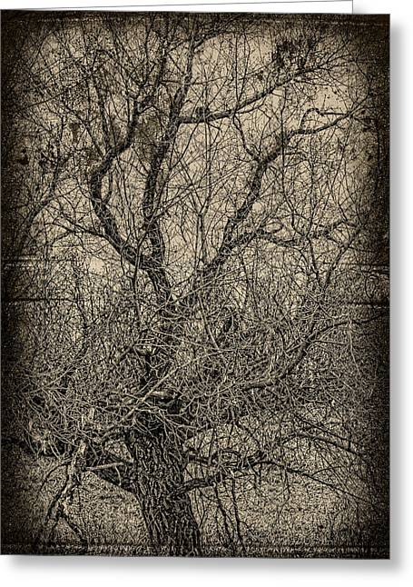 Tickle Of Branches  Greeting Card by JC Photography and Art