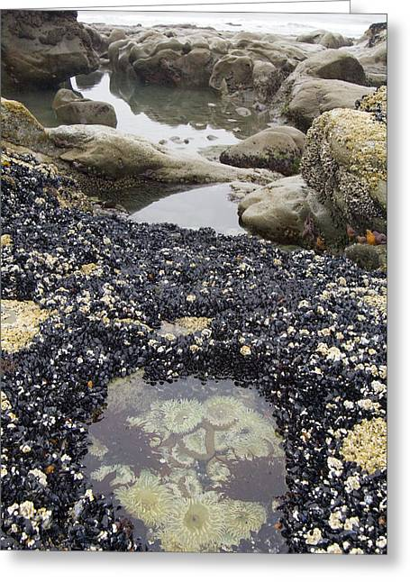 Californian Greeting Cards - Tide Pool Greeting Card by Georgette Douwma