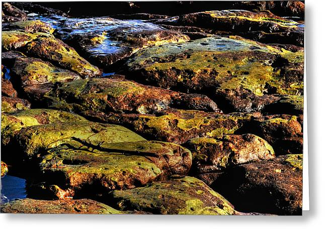 Jacksonville Greeting Cards - Tide Pool Greeting Card by William Jones
