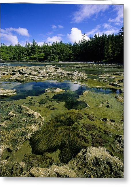 Botanical Beach Greeting Cards - Tide Pools, Botanical Beach, Vancouver Greeting Card by John Sylvester