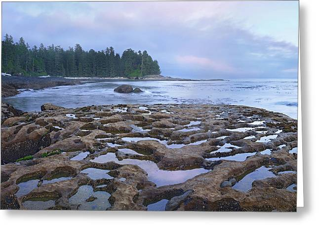 Botanical Beach Greeting Cards - Tide Pools Exposed At Low Tide Greeting Card by Tim Fitzharris