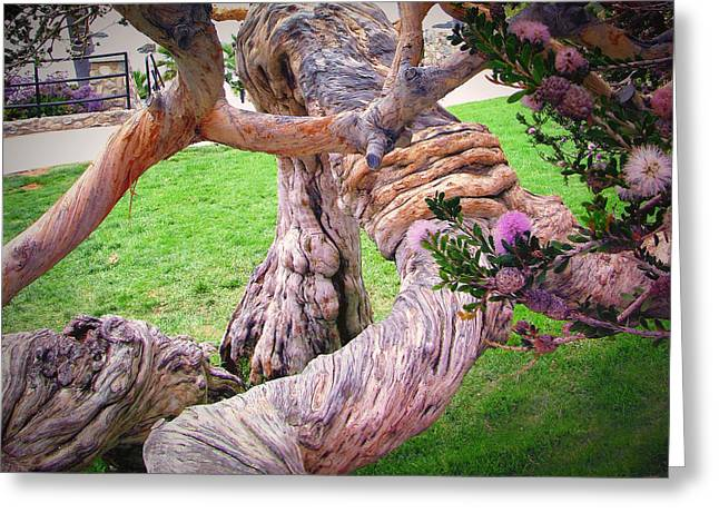 Heisler Park Greeting Cards - Tied in Knots Greeting Card by Diane Wood