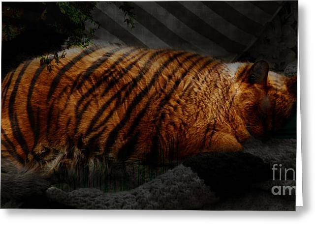 Tiger Dream Greeting Cards - Tiger Dreams Greeting Card by Kathi Shotwell