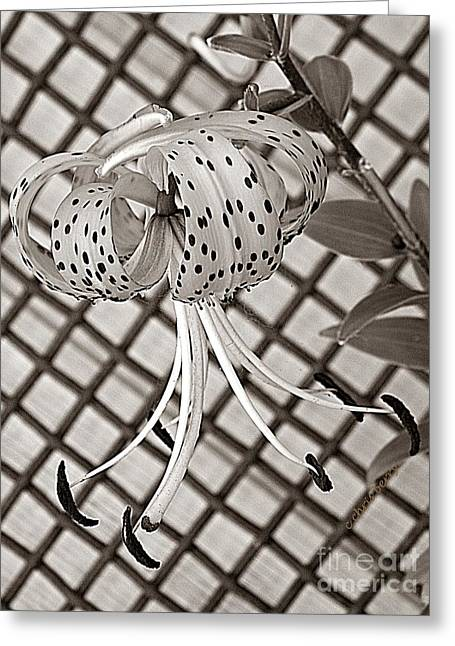 Yearly Greeting Cards - Tiger Lily and Rusty Gate Greeting Card by Chris Berry