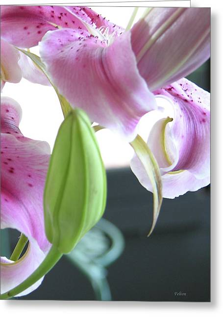 Sunlight On Flowers Greeting Cards - Tiger Lily bud Greeting Card by Julianne Felton