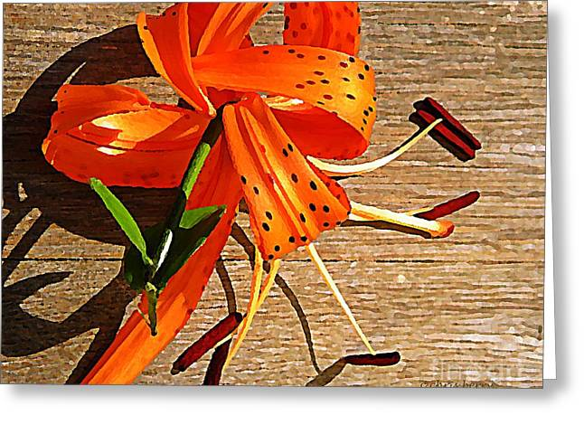 Tiger Lily with Watercolor  Greeting Card by Chris Berry