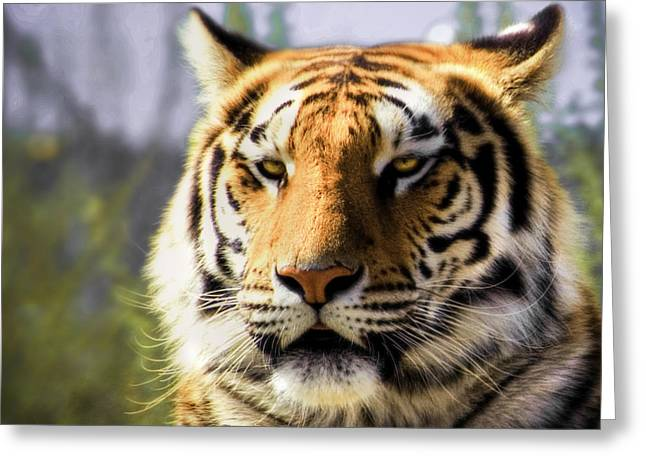 Close-up Of Cat Greeting Cards - Tiger Stripes Greeting Card by Anthony Citro