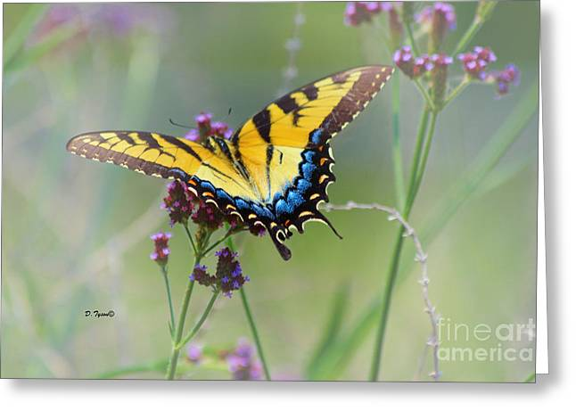 Common Tiger Butterfly Greeting Cards - Tiger Swallowtail Greeting Card by Diana  Tyson