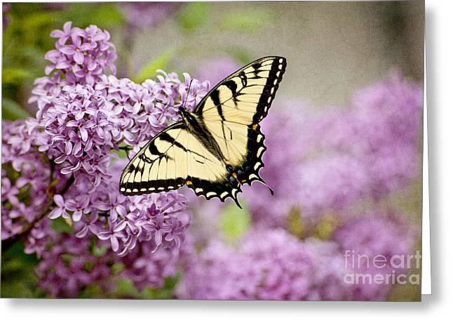 """cheryl Davis"" Greeting Cards - Tiger Swallowtail On Lilac Textured Greeting Card by Cheryl Davis"