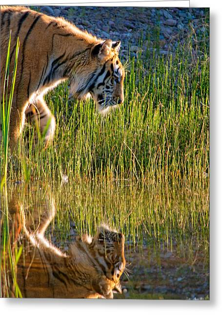 Refection Greeting Cards - Tiger Tiger burning bright Greeting Card by Melody Watson