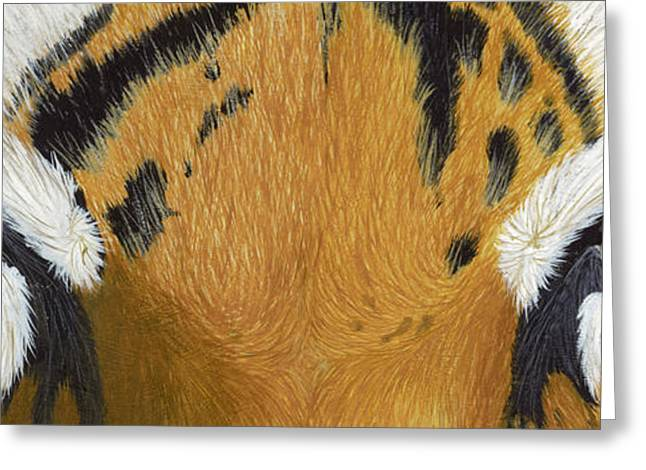 The Tiger Greeting Cards - Tigers Eye Greeting Card by Laurie Bath