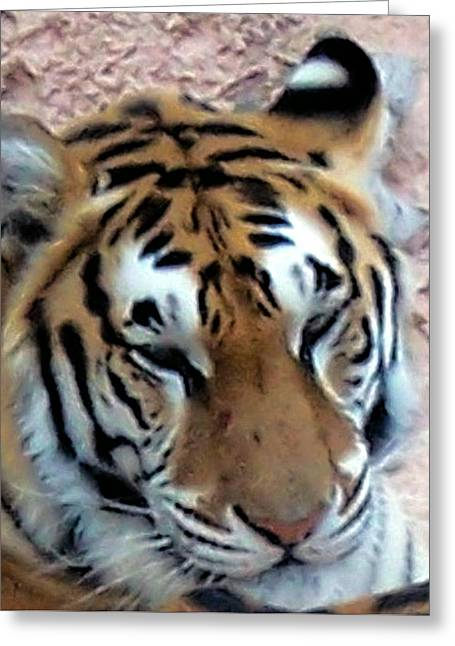 Pictures Of Cats Greeting Cards - Tigers Head Greeting Card by Les Morris