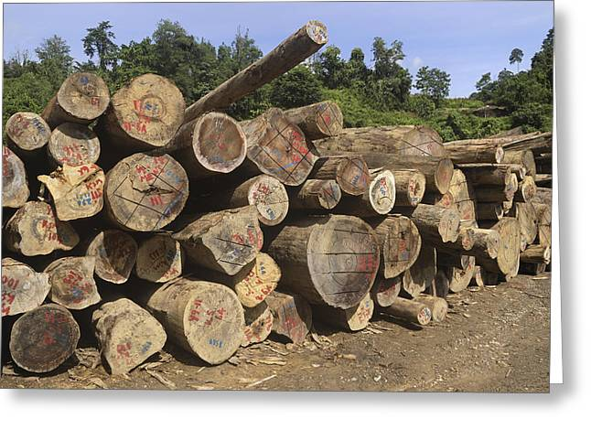 Logging Images Greeting Cards - Timber At A Logging Area, Danum Valley Greeting Card by Thomas Marent