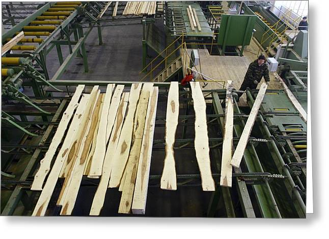 Automated Photographs Greeting Cards - Timber Coming From A Saw Line At Sawmill Greeting Card by Ria Novosti