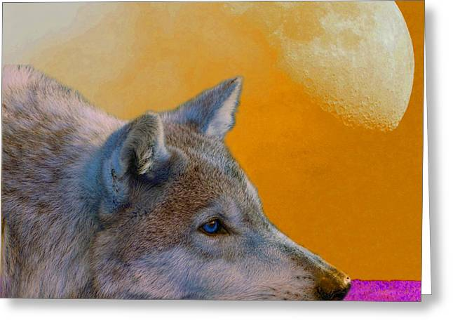 Wolves Greeting Cards - Timber Wolf Under the Moon Greeting Card by Tina B Hamilton