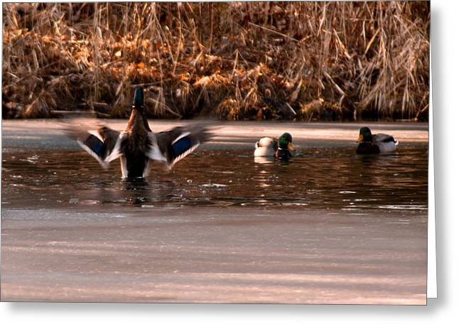Nature Center Pond Greeting Cards - Time for me to Fly Greeting Card by LeeAnn McLaneGoetz McLaneGoetzStudioLLCcom
