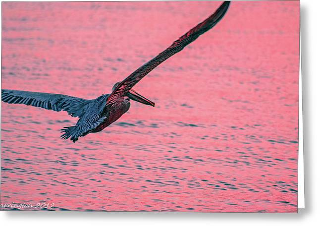 Cedar Key Greeting Cards - Time to Fly Greeting Card by Shannon Harrington
