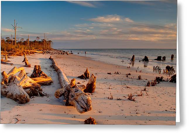 Driftwood Beach Greeting Cards - Timeless Florida Beach Greeting Card by Rich Leighton