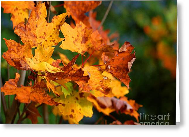 Tannic Acid Greeting Cards - Times They Are A Changing Greeting Card by Diane E Berry