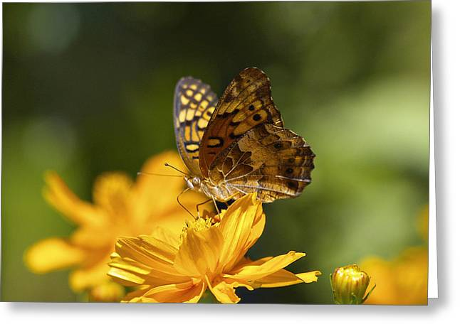 Butterfly Digital Art Greeting Cards - Tiny Butterfly Feeding Greeting Card by J Larry Walker