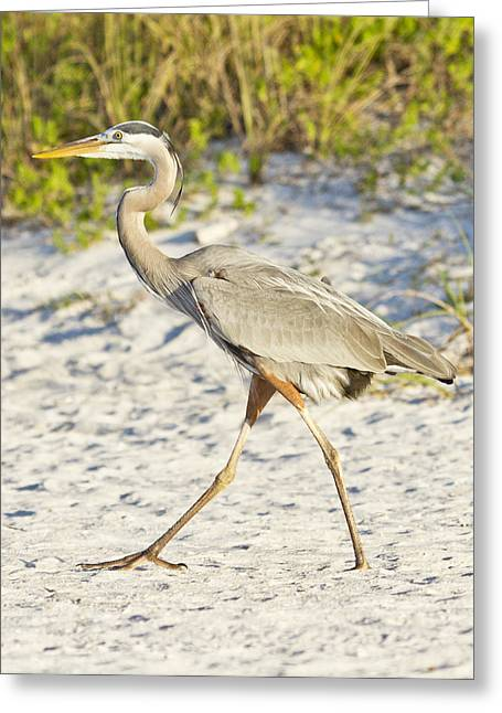 Hunting Bird Greeting Cards - Tip Toe Greeting Card by Betsy A  Cutler
