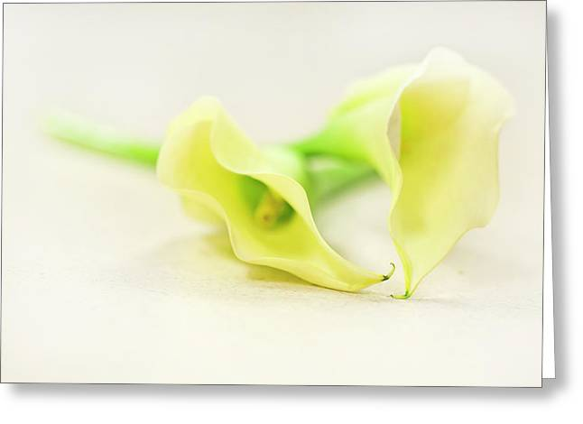 Calla Lily Greeting Cards - To Have And To Hold... Greeting Card by Evelina Kremsdorf