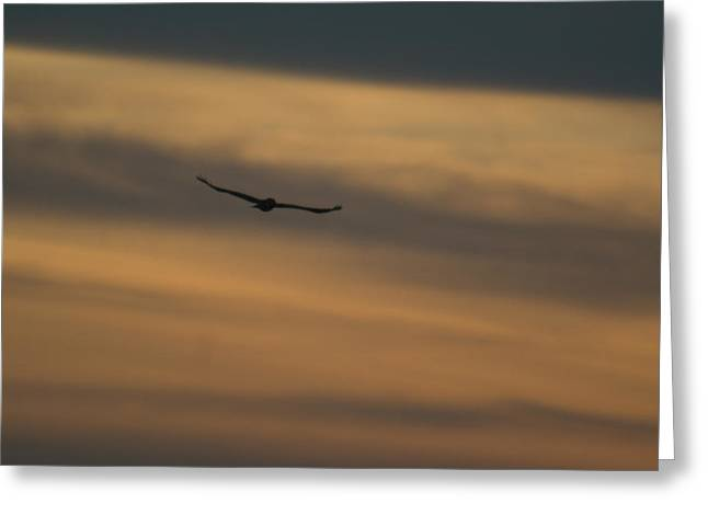 Lawrence County Greeting Cards - To Soar - Free Greeting Card by Douglas Barnett