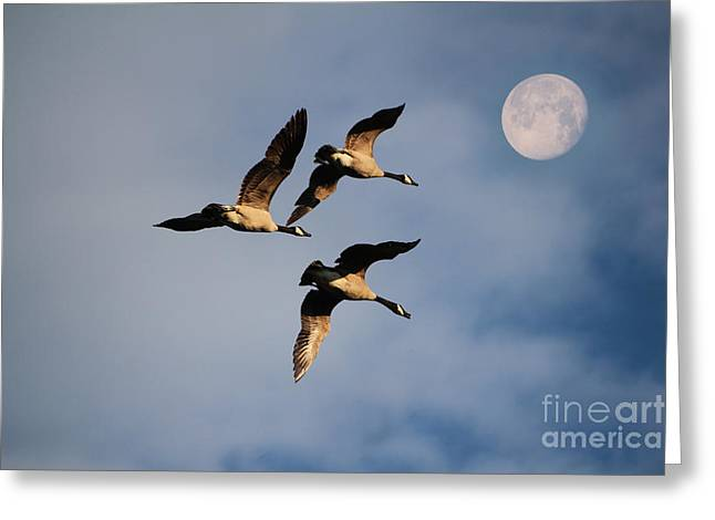 Flying Bird Mixed Media Greeting Cards - To the Moon and Back Greeting Card by Marjorie Imbeau