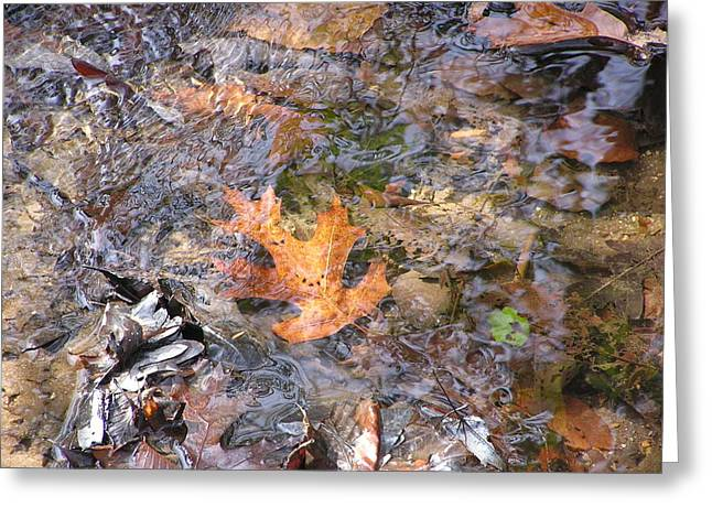 Babbling Greeting Cards - To Touch A Leaf Greeting Card by Diane Frick