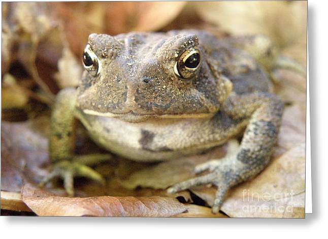 Lainie Wrightson Greeting Cards - Toad Greeting Card by Lainie Wrightson