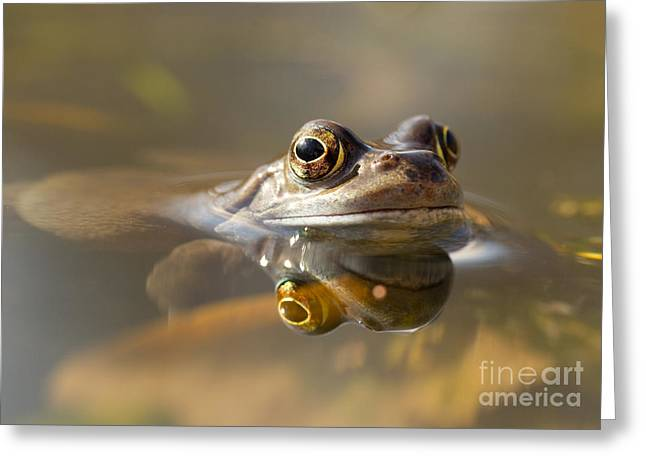 Clare Scott Greeting Cards - Toad of Toad Hall Greeting Card by Clare Scott