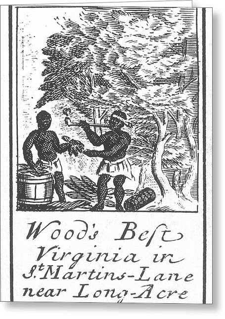Slaves Photographs Greeting Cards - TOBACCO LABEL, c1675 Greeting Card by Granger