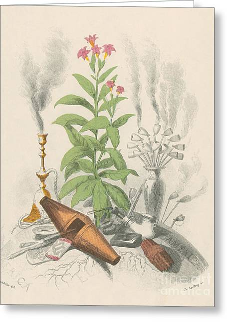 Les Fleurs Greeting Cards - Tobacco Plant Greeting Card by Science Source